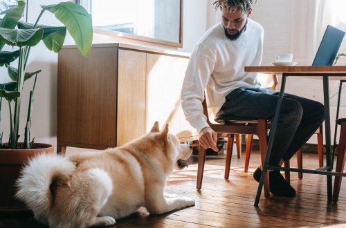 Барьеры для путешествий, с которыми вы сталкиваетесь, беря с собой домашних животных